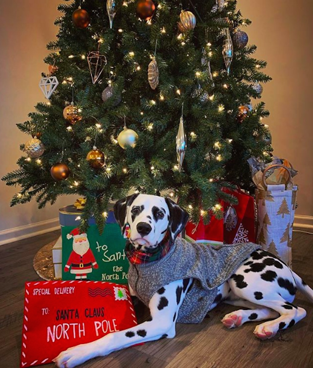 dogs excited about christmas
