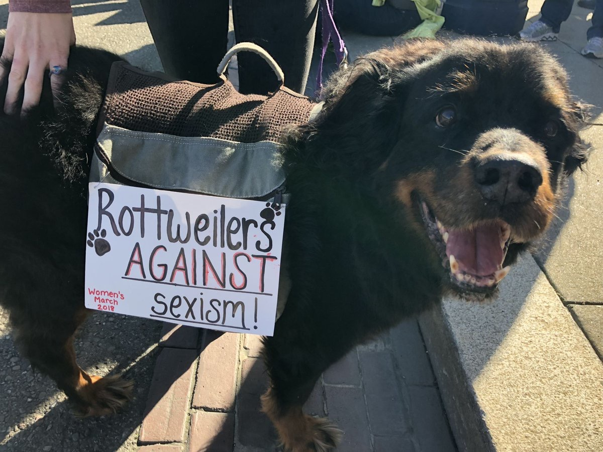 Dog at Women's March Animal Stories 2018