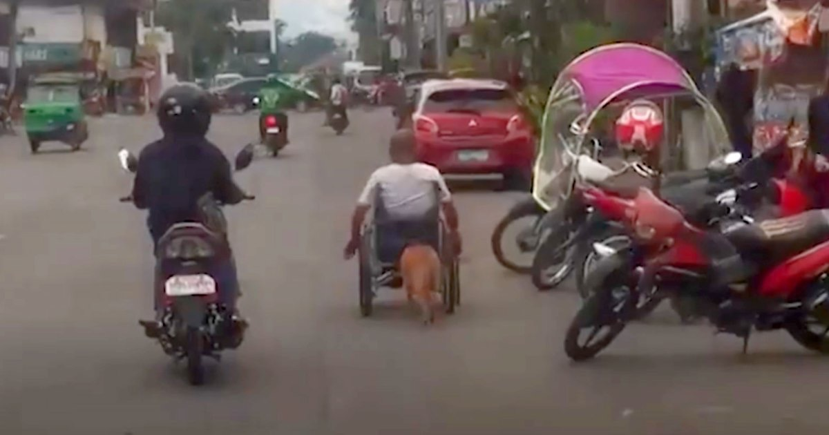 Dog pushes owner in wheelchair Animal Stories 2018