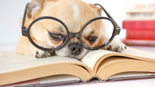 Good dog reading a book {Animal Stories}