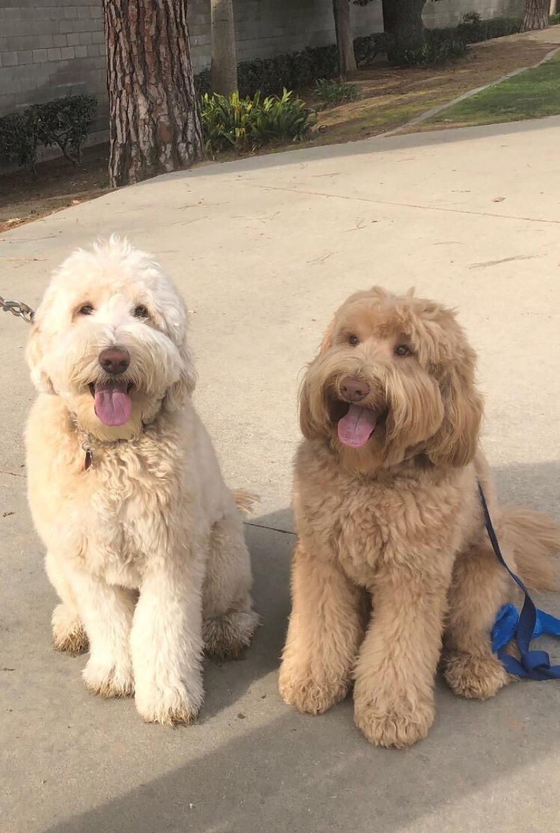 Dog Siblings {Animal Stories}