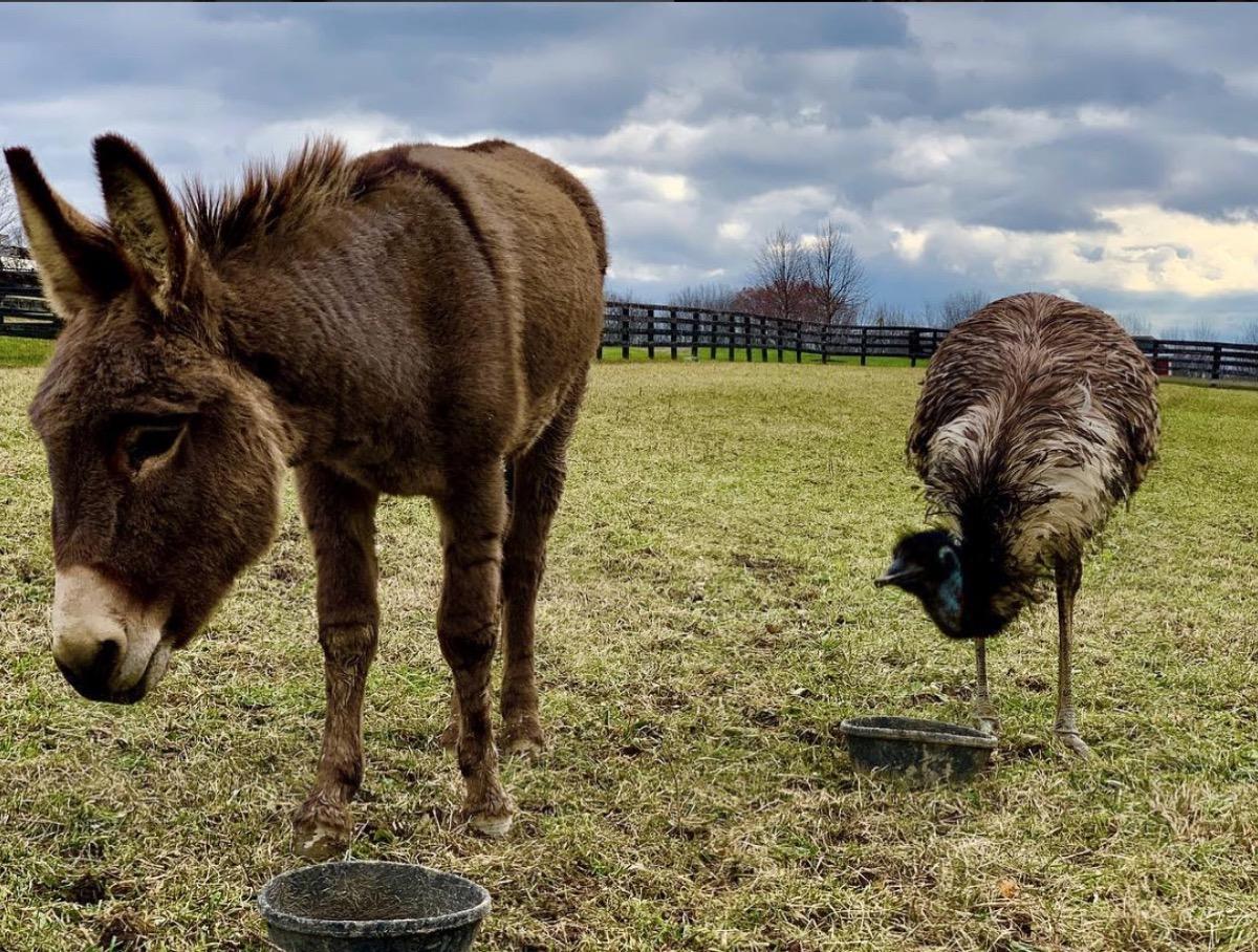 jeffrey dean morgan emu donkey adoption {best of 2018}