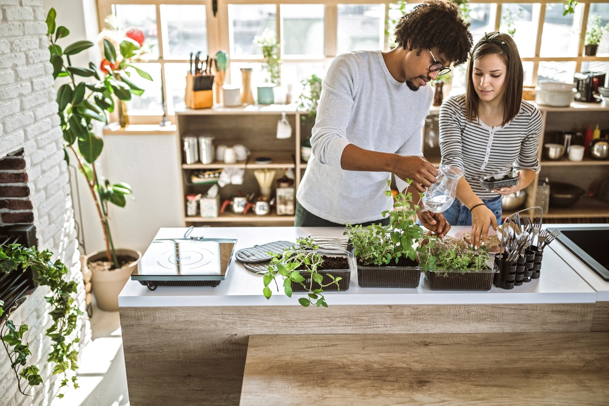 millennial multi-ethnic couple taking care and watering kitchen herbs at their apartment