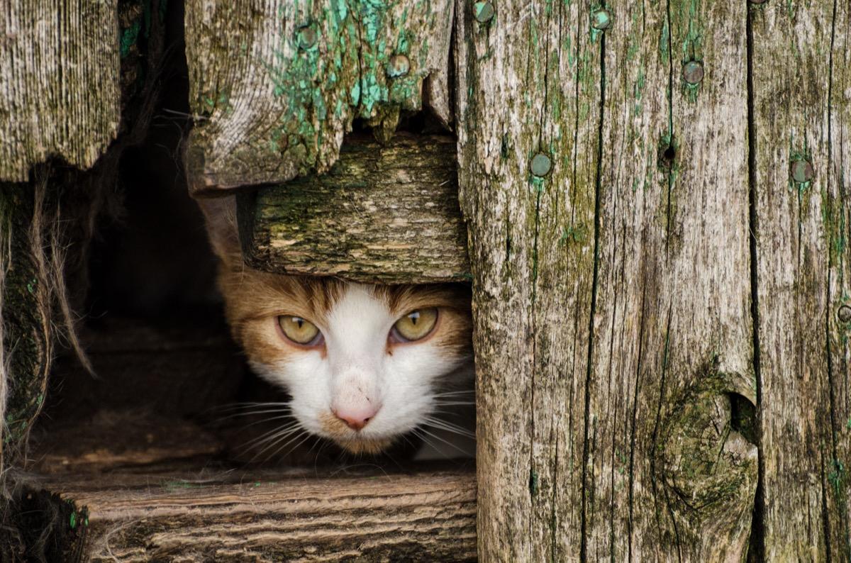 feral cat hiding in farmhouse