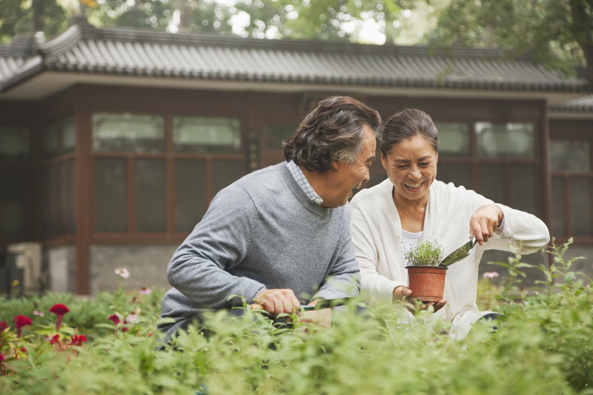 older asian couple potting a plant together