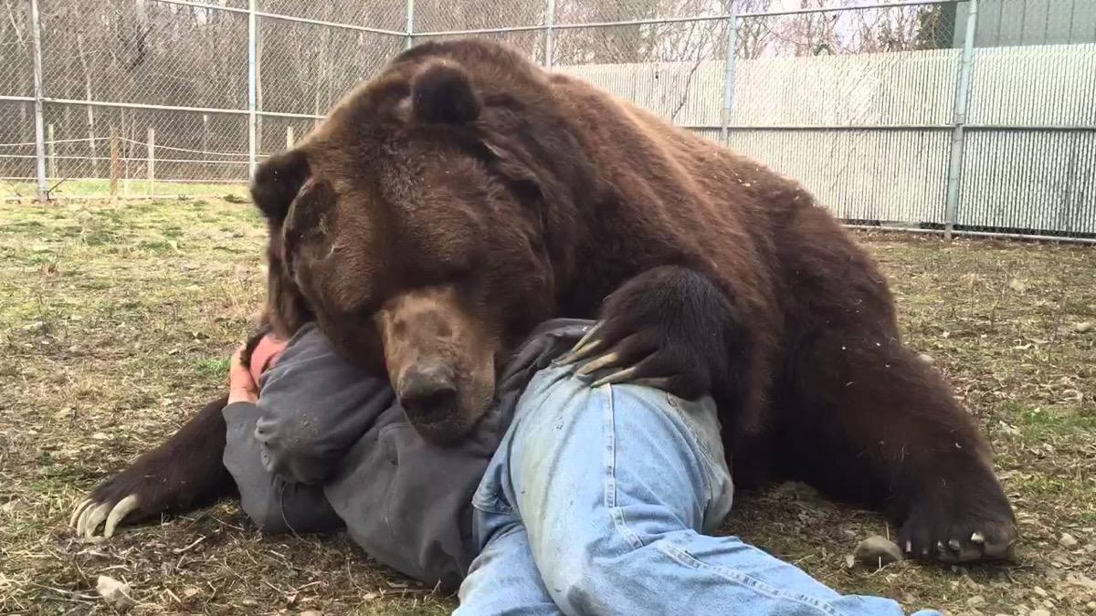 Jimbo the Kodiak Bear Animal Stories 2018
