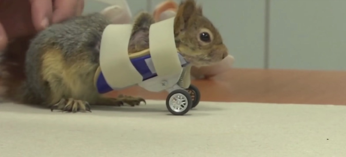squirrel with wheels {best of 2018}