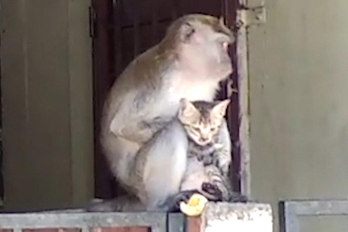 Kitten at Monkey Spa Animal Stories 2018