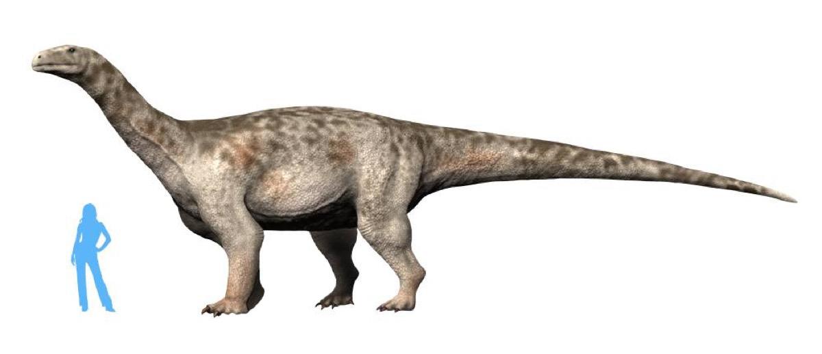 new dinosaur Ledumahadi mafube {best of 2018}