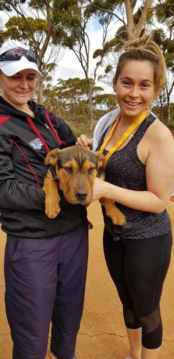 Dog Who Ran a Marathon {Animal Stories}
