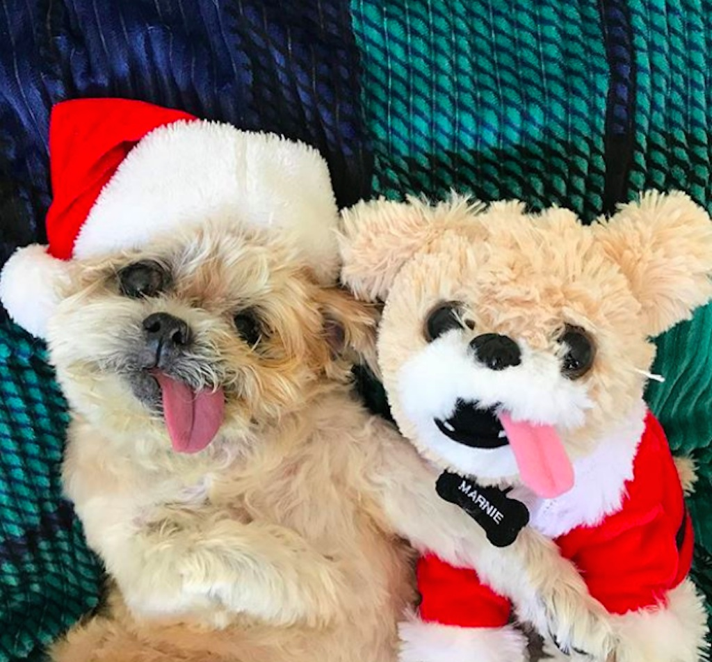 dogs excited for christmas