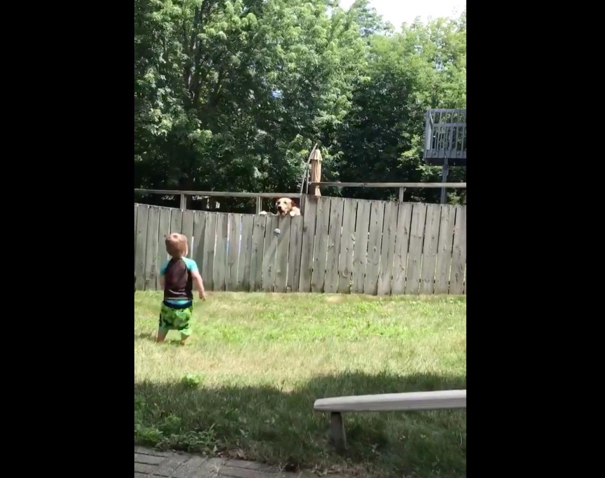 Neighbor Dog Playing Fetch {Animal Stories}