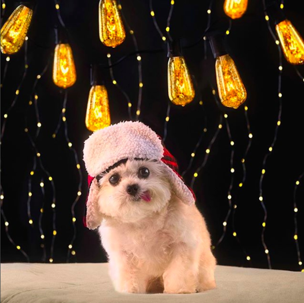 dogs who are excited for christmas