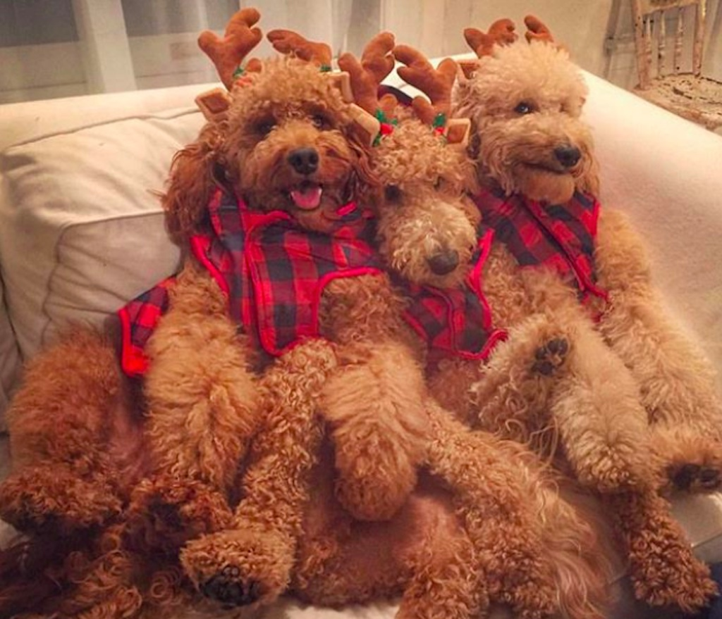 dogs excited for the holidays
