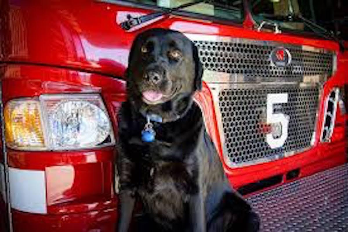 Smokey Firehouse Dog Animal Stories 2018