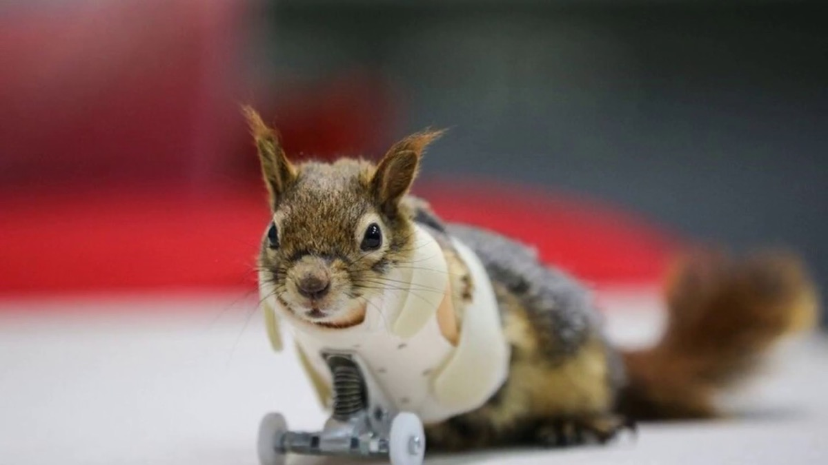 Squirrel with Wheels {Animal Stories}