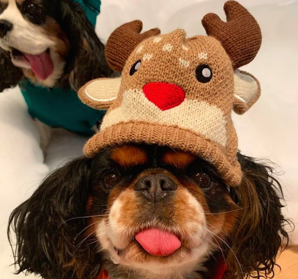 dogs excited for holidays