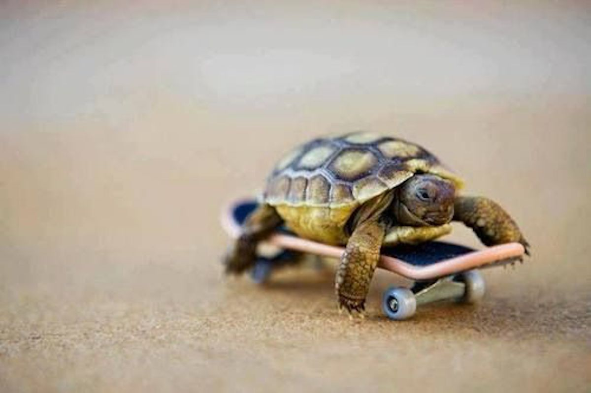 Turtle Riding Skateboard Animal Stories 2018
