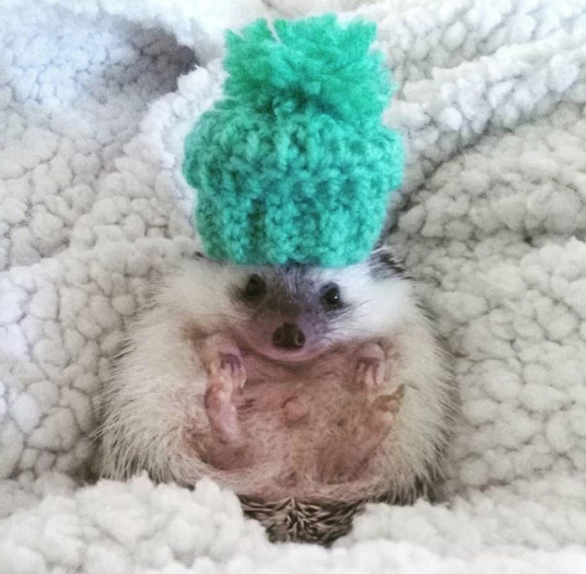 Wilbur the Hedgehog Animal Stories 2018