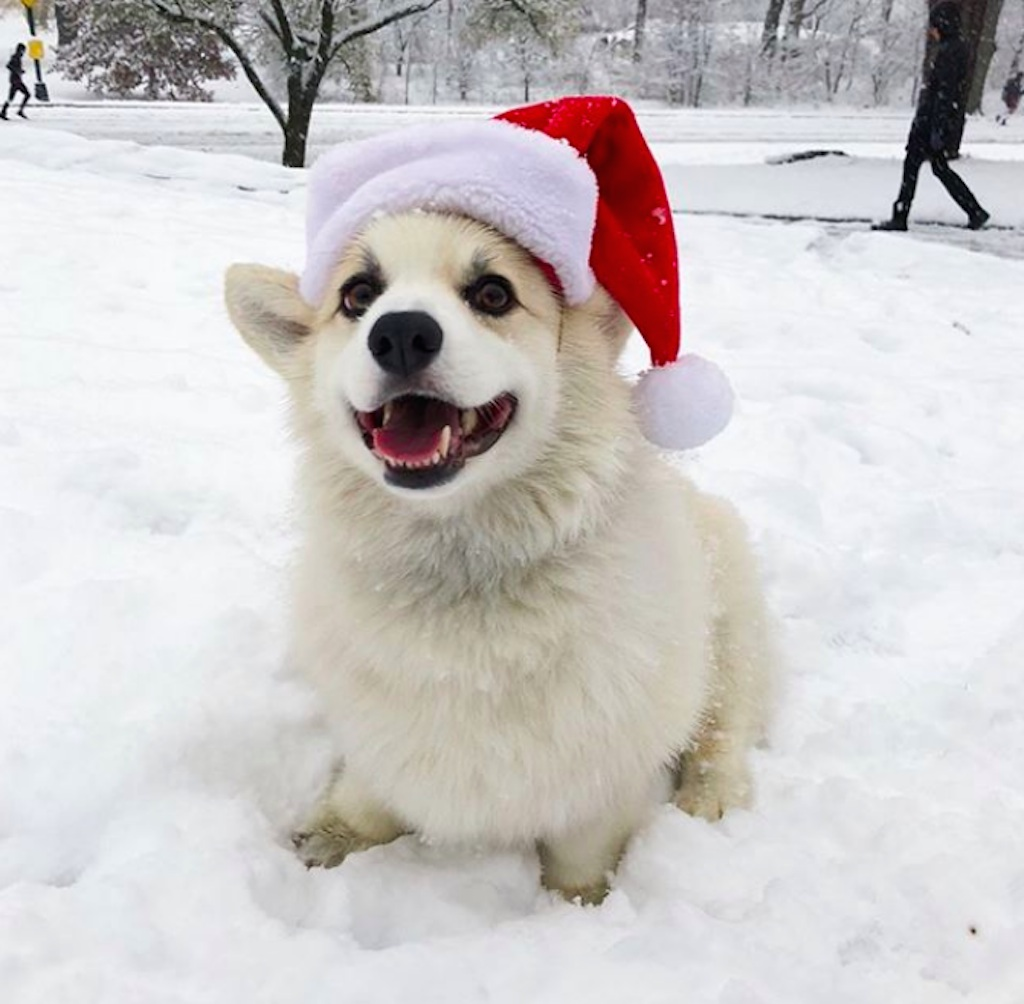 dogs who are excited for the holidays