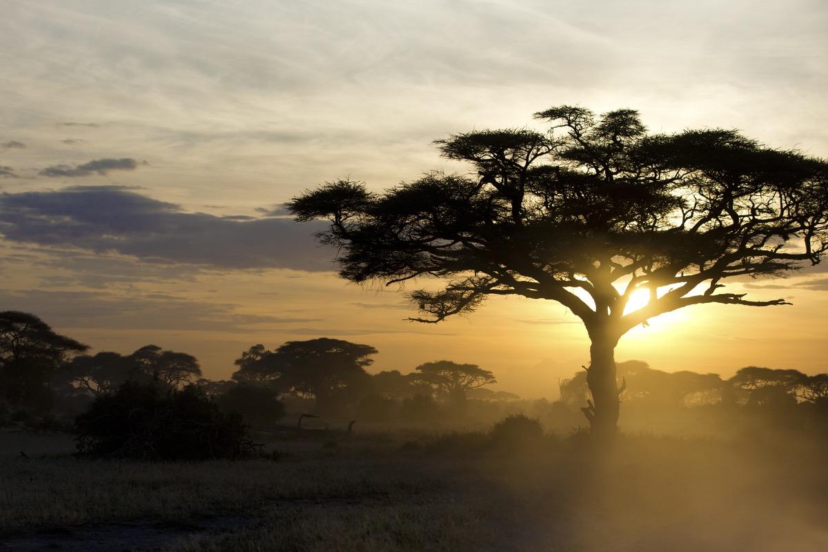 Acacia tree at sunset in Kenya 03