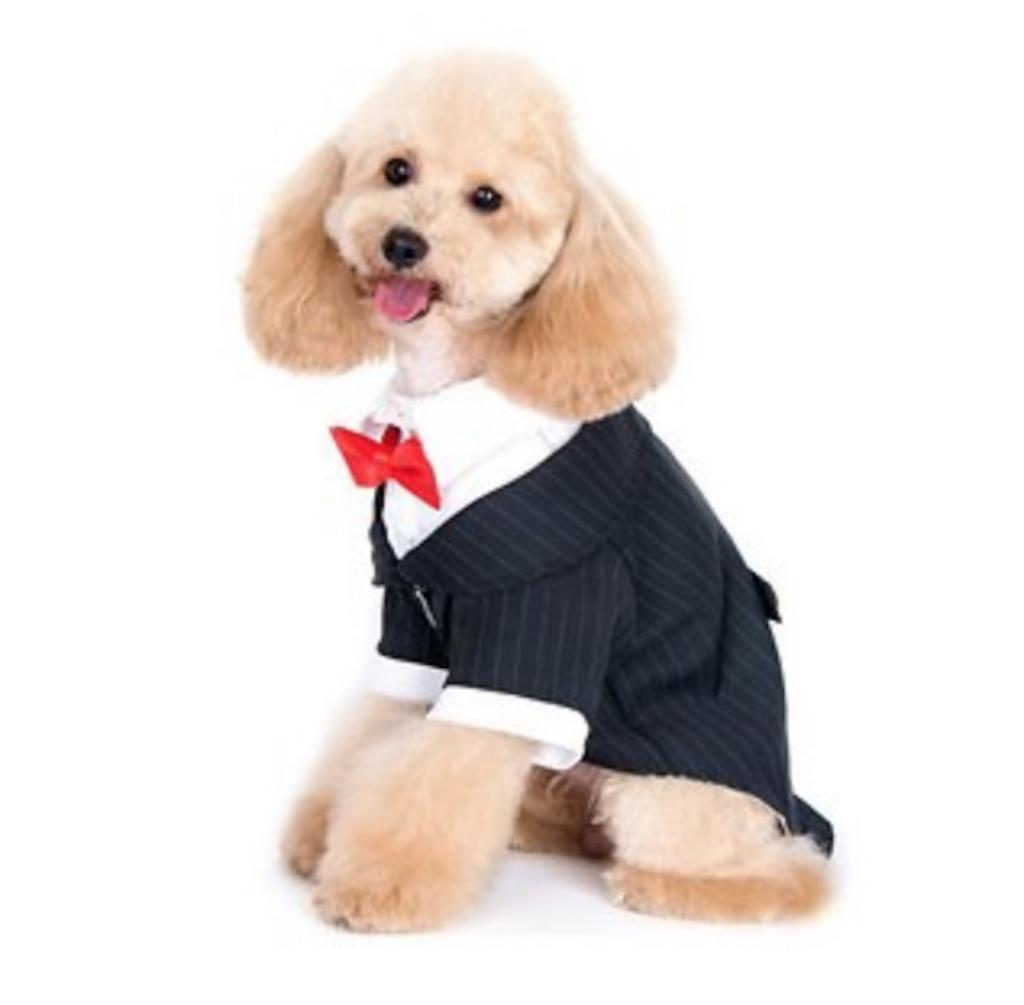 Alfie pet tuxedo adorable dog outfits