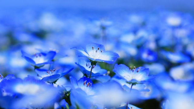 blue flowers in nature