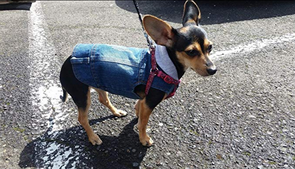 Dog Jean Jacket adorable dog outfits