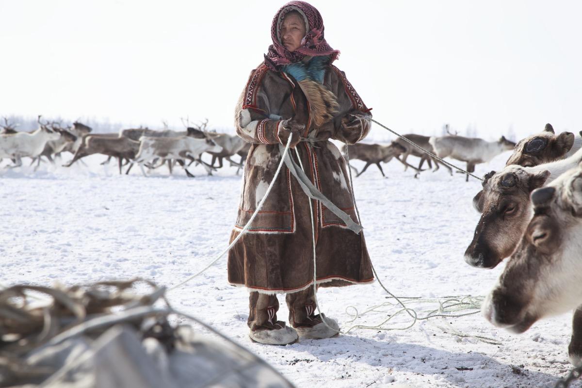 Nadym, Russia - March 18, 2017:assistant reindeer breeder