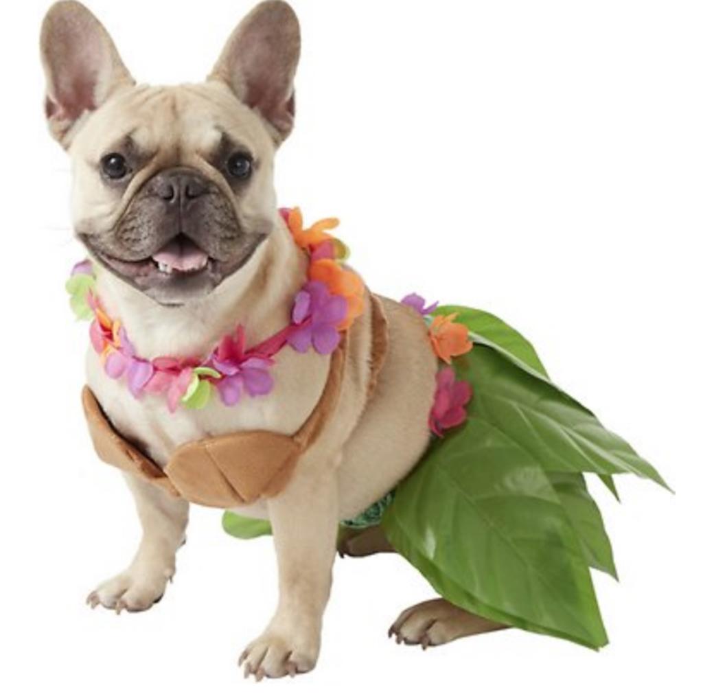 Hula Girl Dog Costume adorable dog outfits