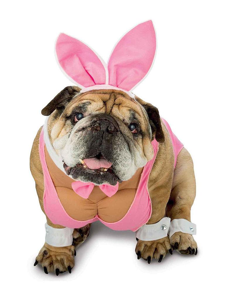 Hunny Bunny Dog Costume adorable dog outfits
