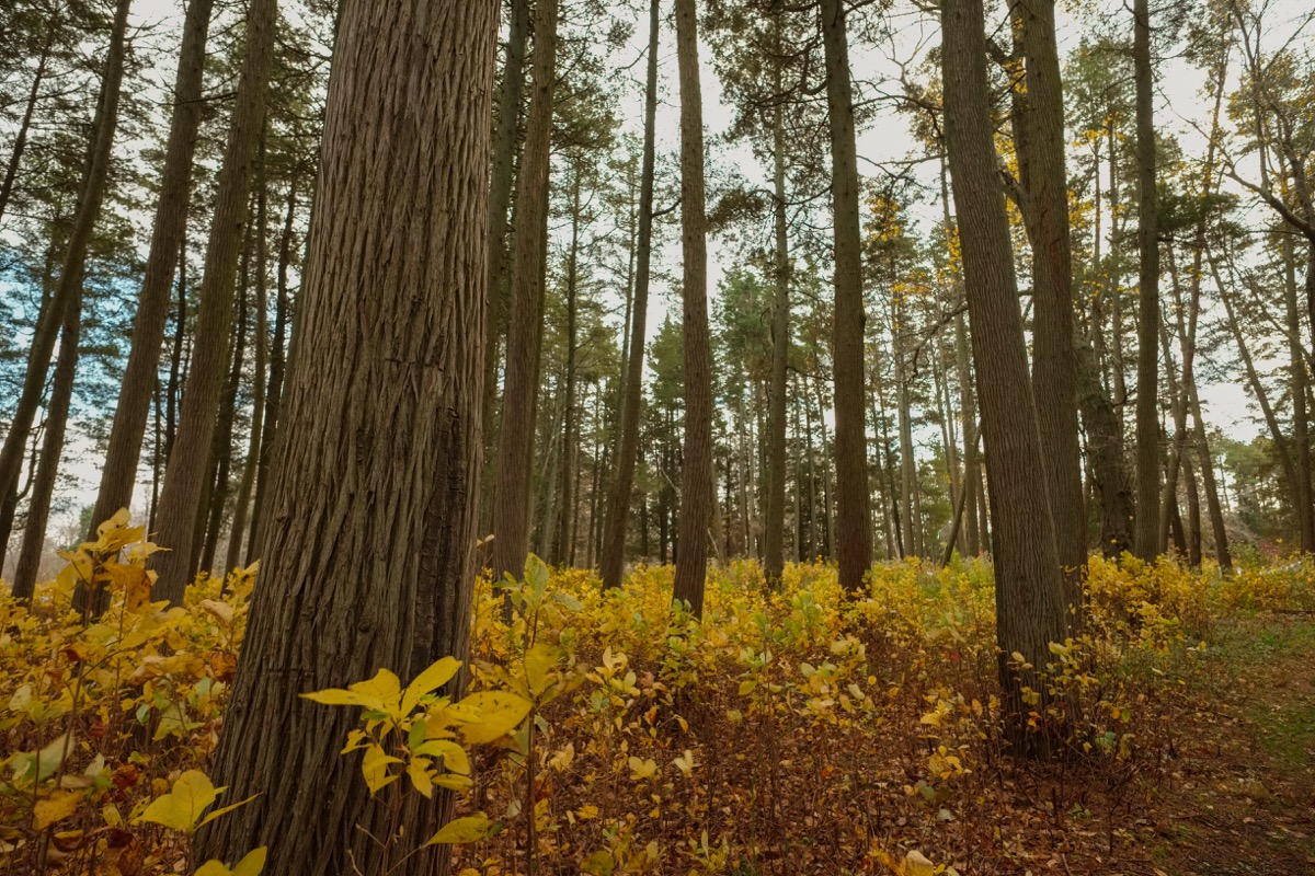 pine barrens in new jersey