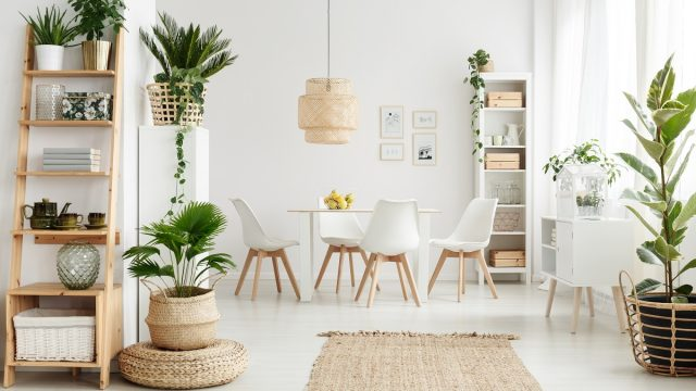 Plants in Home Affordable ways to remodel your home