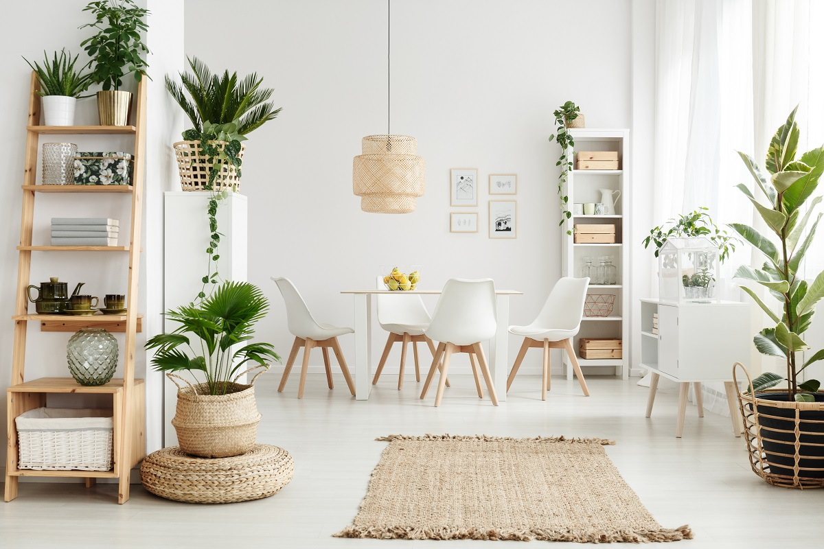 Plants in Home things in your house attracting pests
