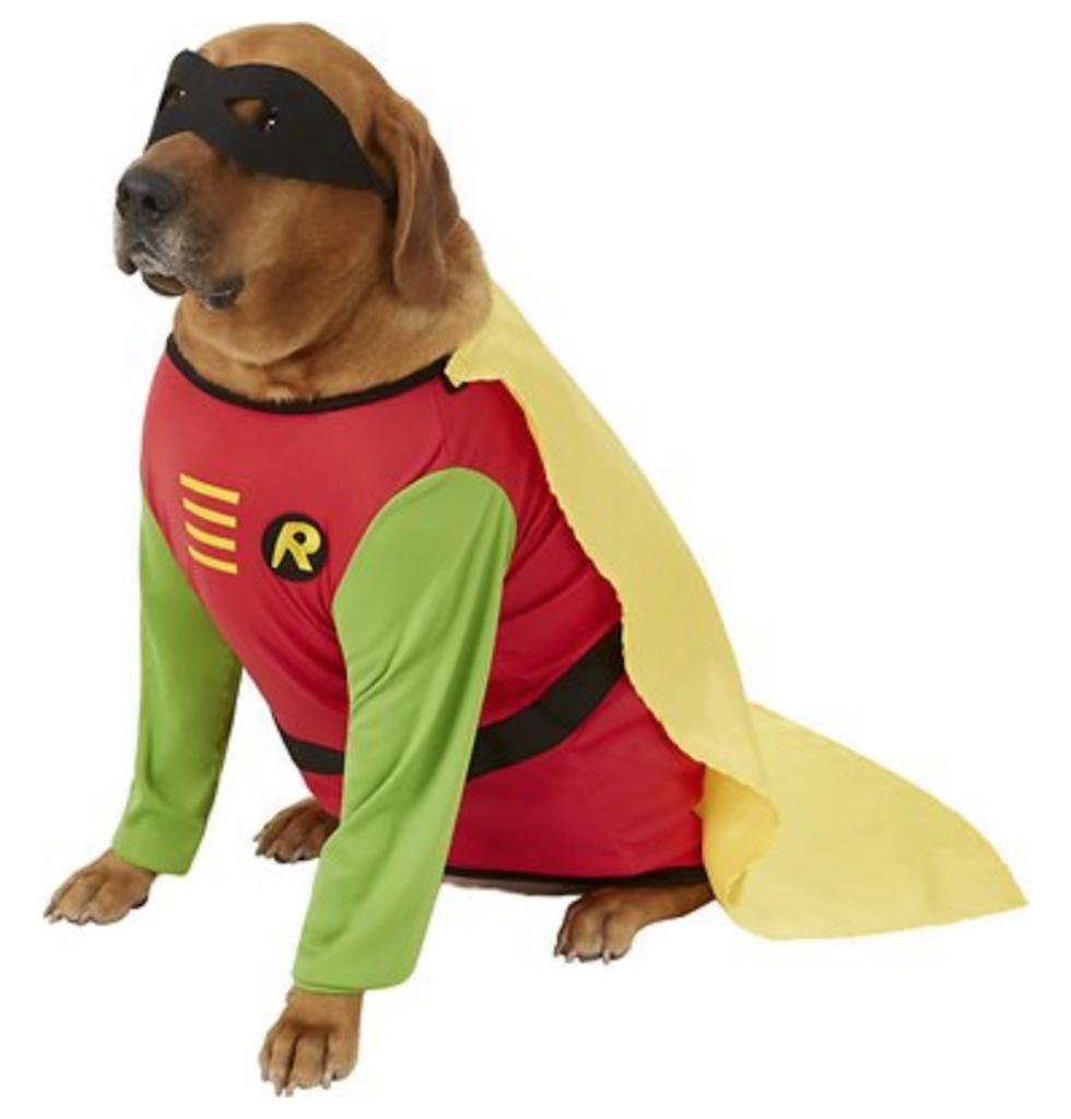 Robin Dog Costume adorable dog outfits