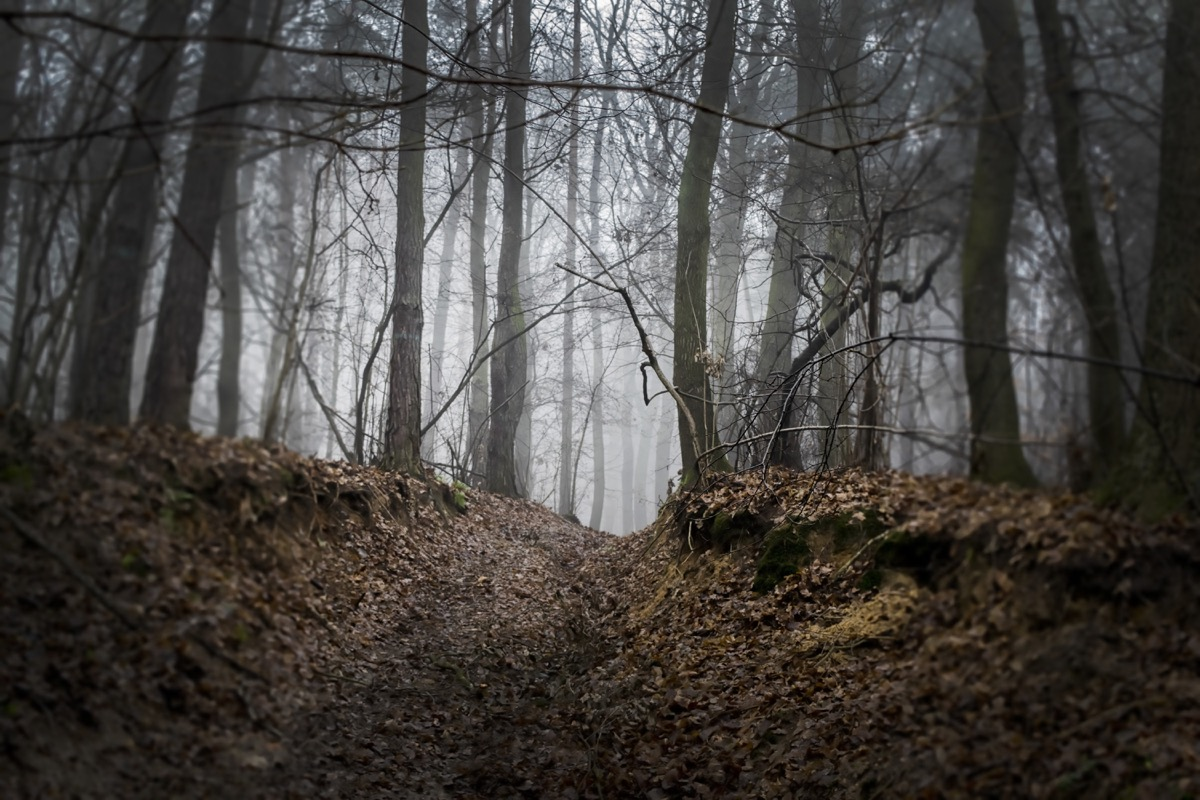 scary clearing in the woods,