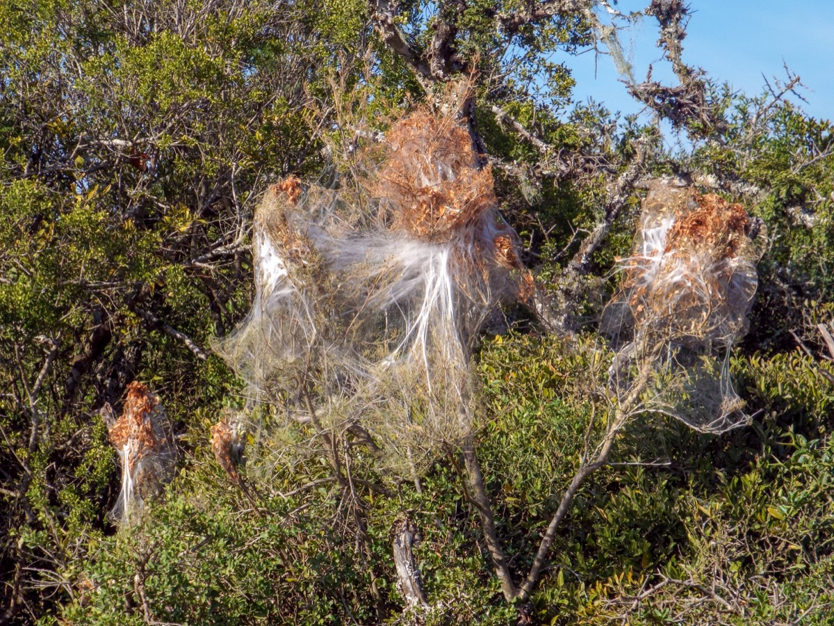 Social Spider Web {Spider Facts}