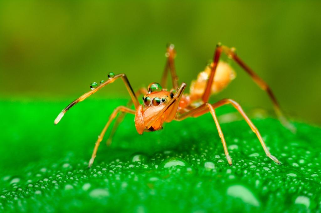 Creepy Ant