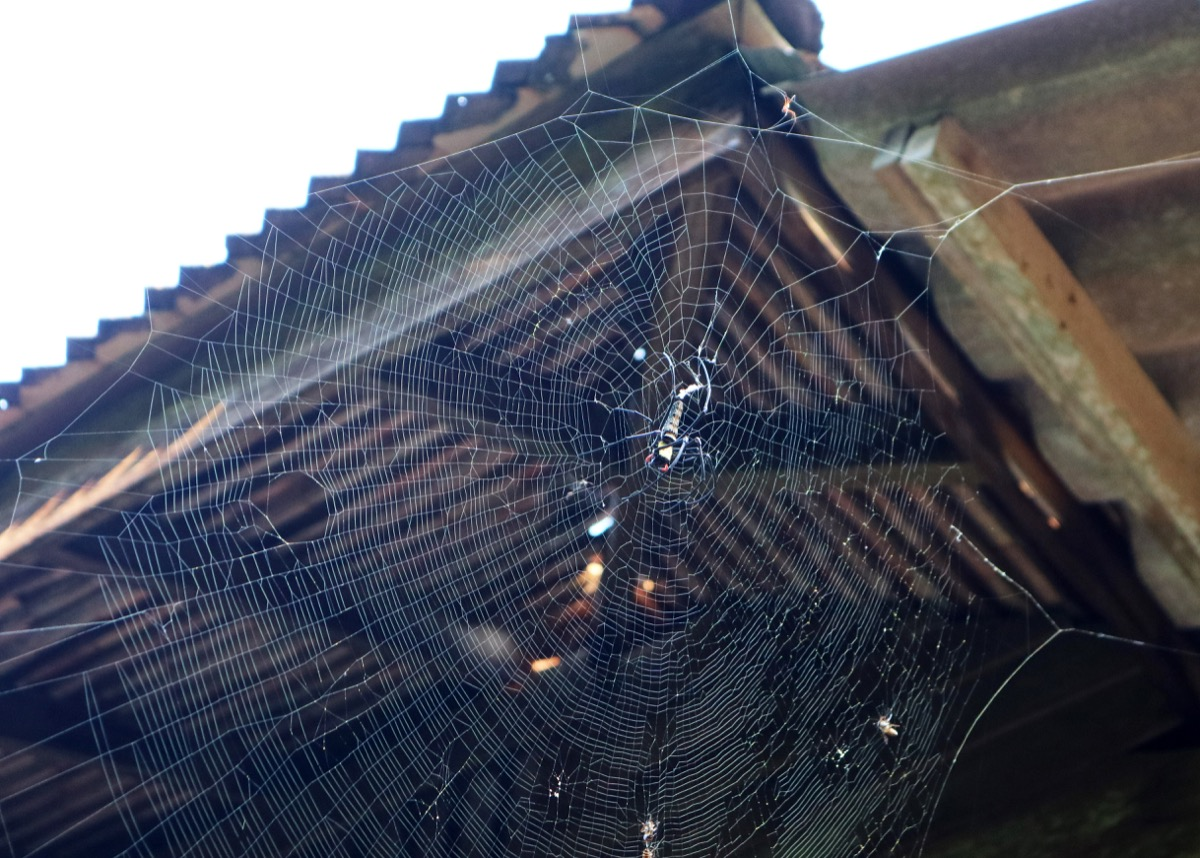 Spider Web on the Side of a House {Spider Facts}