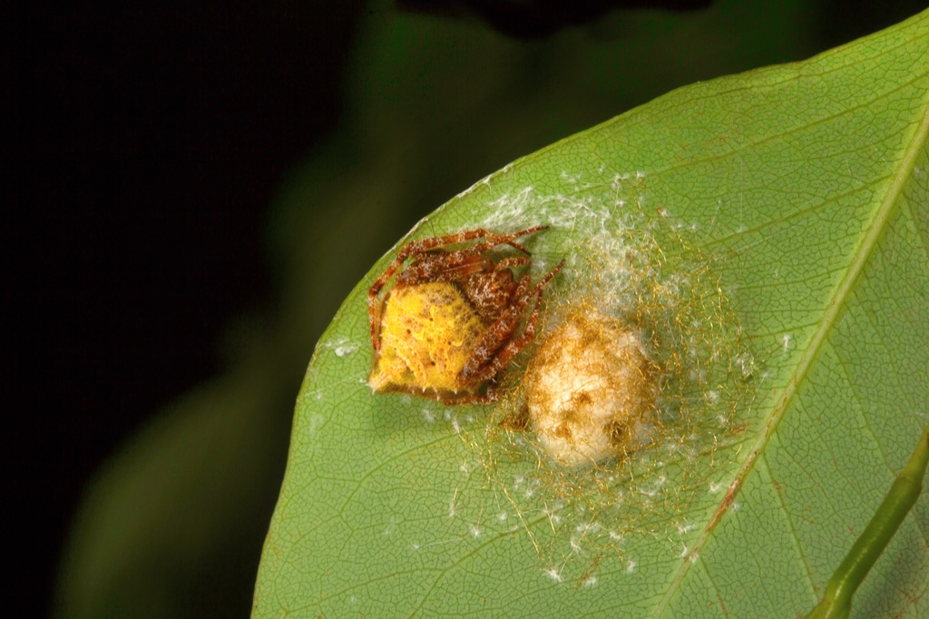 Spiders in a Colony {Spider Facts}