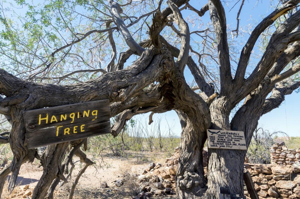 vulture mine hanging tree in arizona