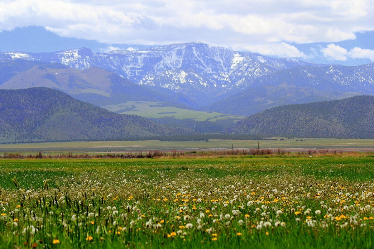 English: Unused farmland covered in wildflowers span across the photo. In the background, snow dusted mountains raise proudly into the clouds.