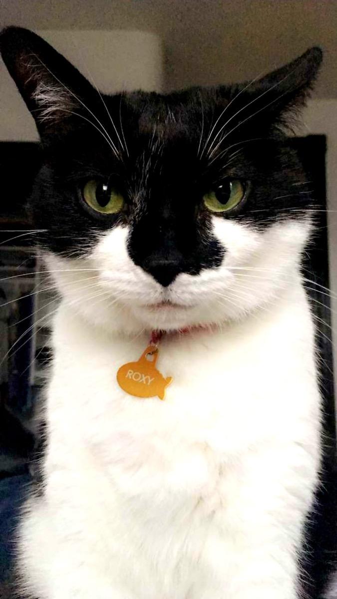 Roxy grumpy