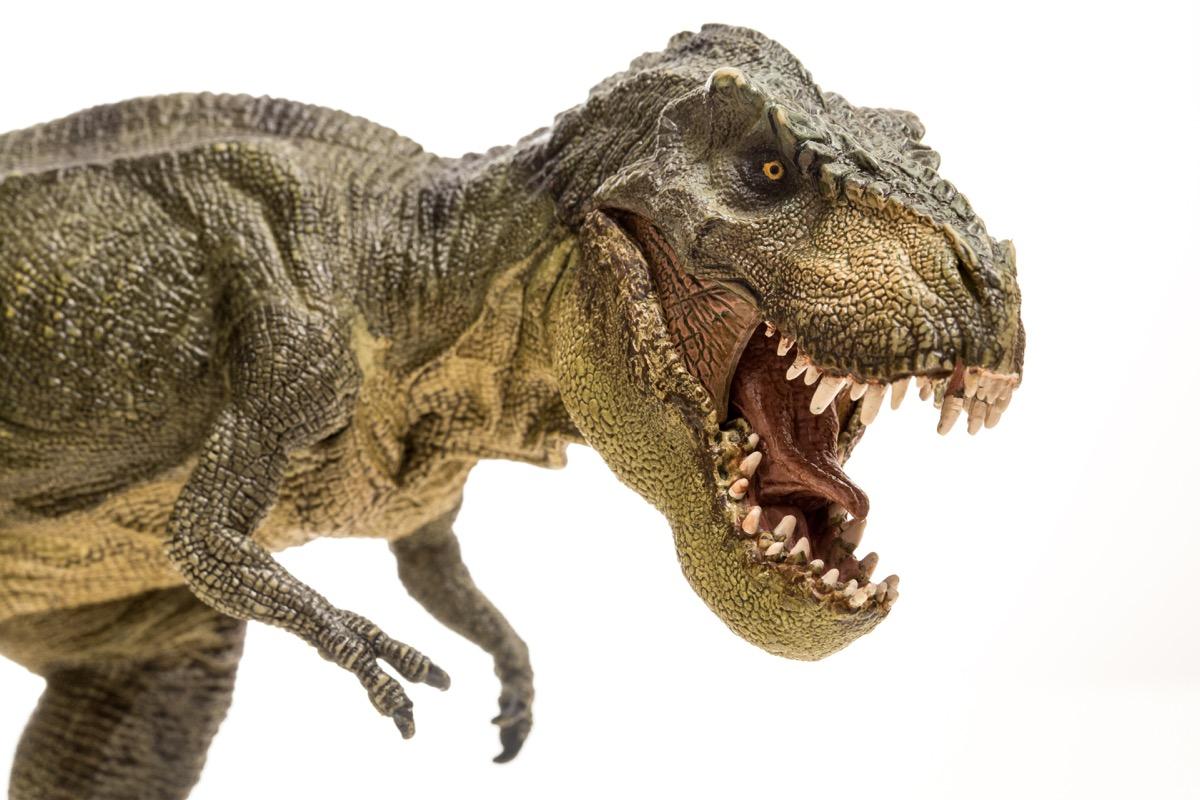 Tyrannosaurus rex isolated in white