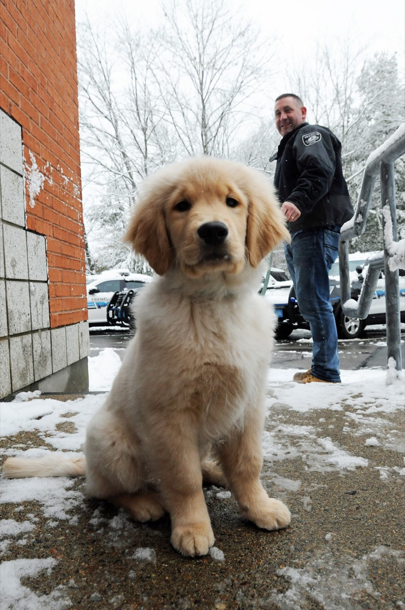 Ben Franklin therapy dog adorable police animals