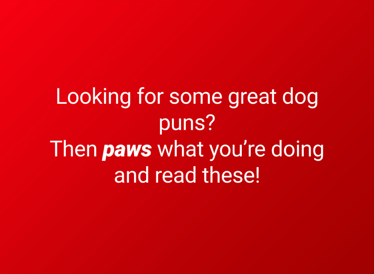 dogs puns intro title card