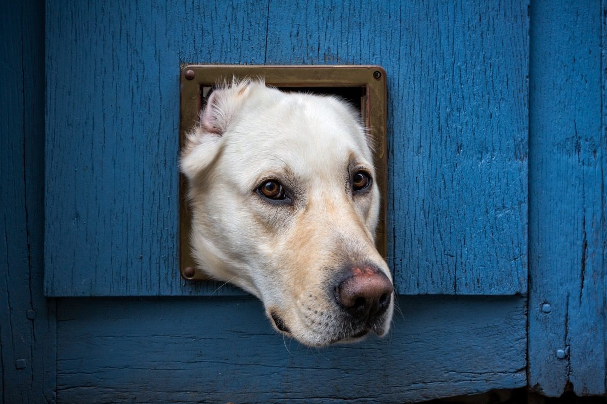 dog stuck in cat door