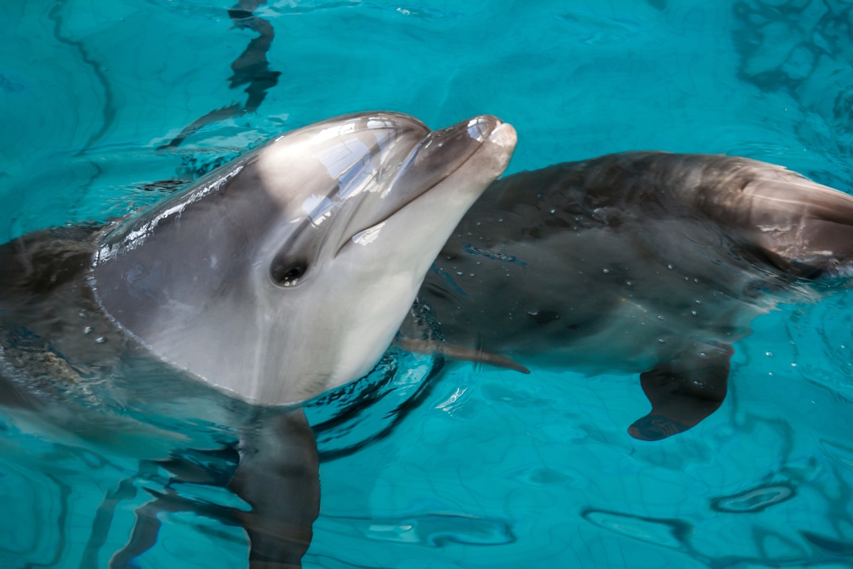 dolphin skin, dolphin facts