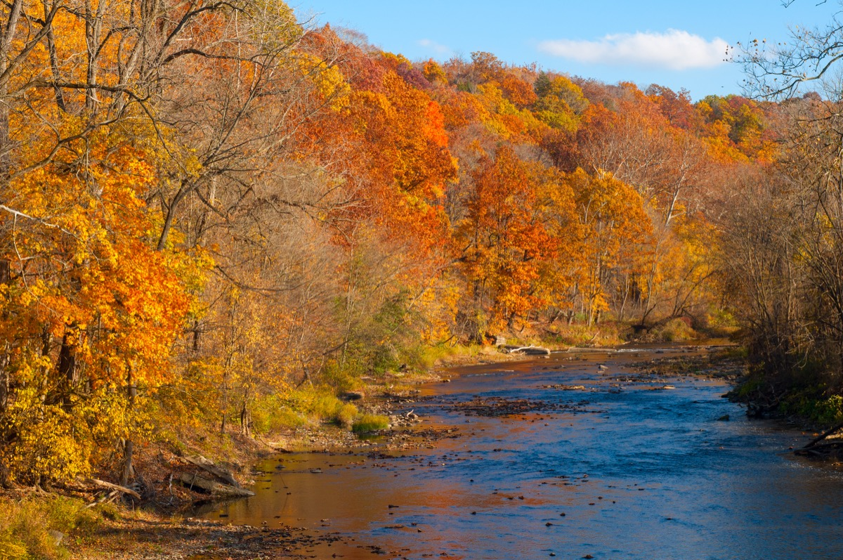 The Chagrin River in Gates Mills, Ohio, flowing through brilliant autumn color - Image