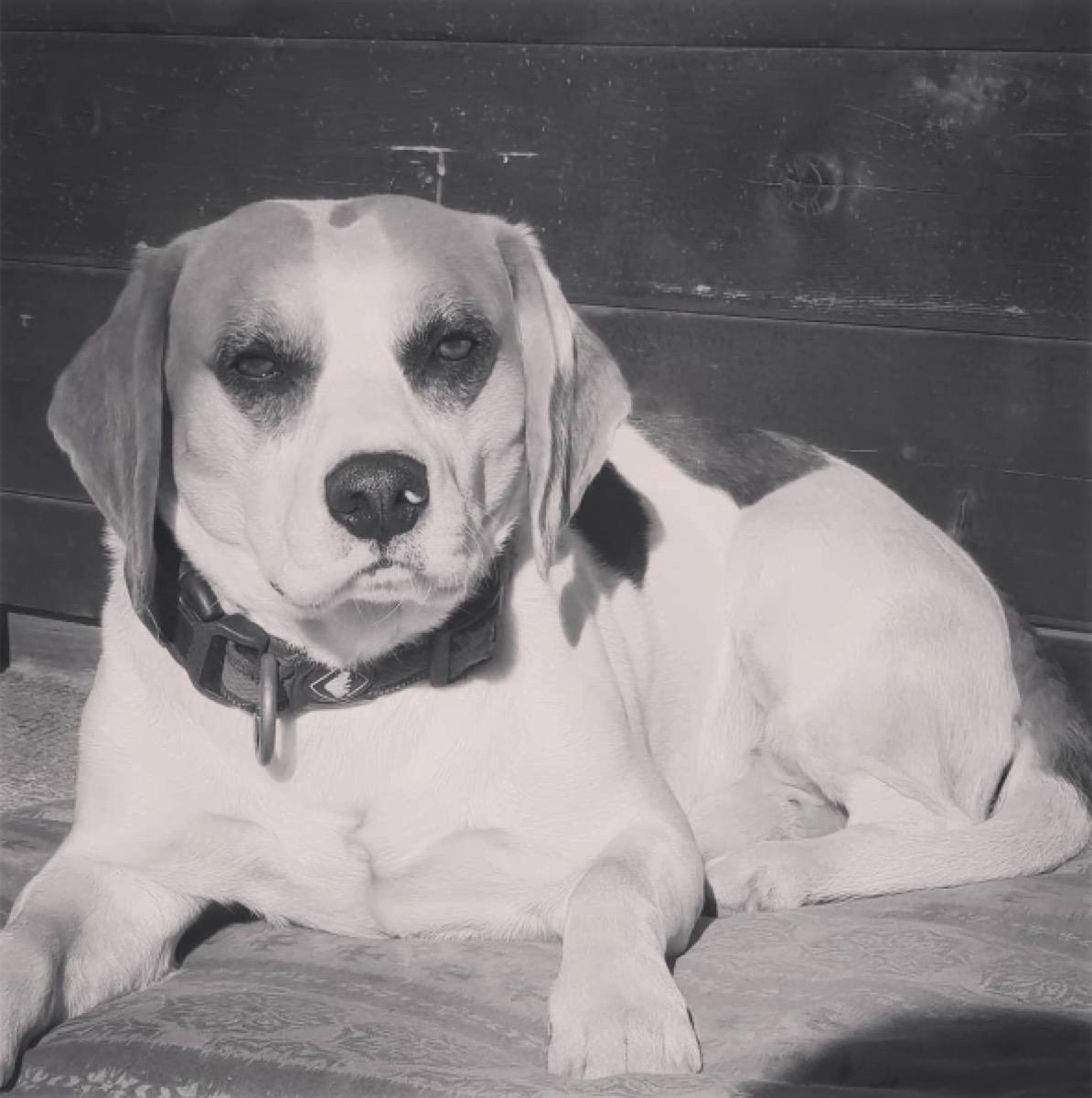 grumpy black and white dog